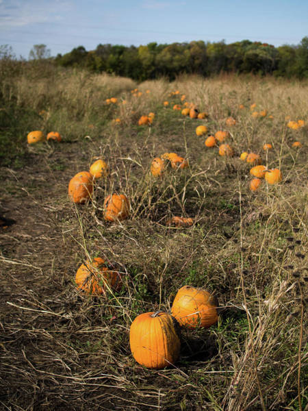 Photograph - Pumpkin Patch by Whitney Leigh Carlson