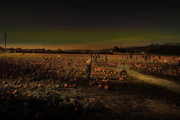 Photograph - Pumpkin-picking Patch by Juan Contreras