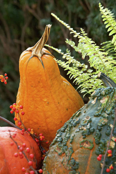 Photograph - Pumpkin Power by Garden Gate magazine