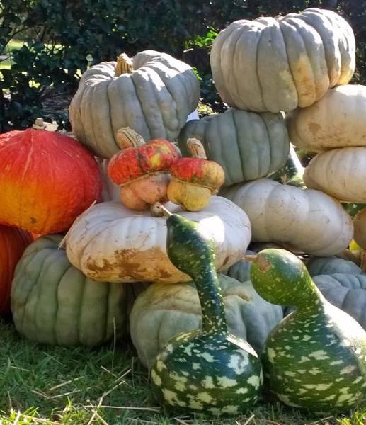 Wall Art - Photograph - Pumpkins And Gourds  by Gayle Miller