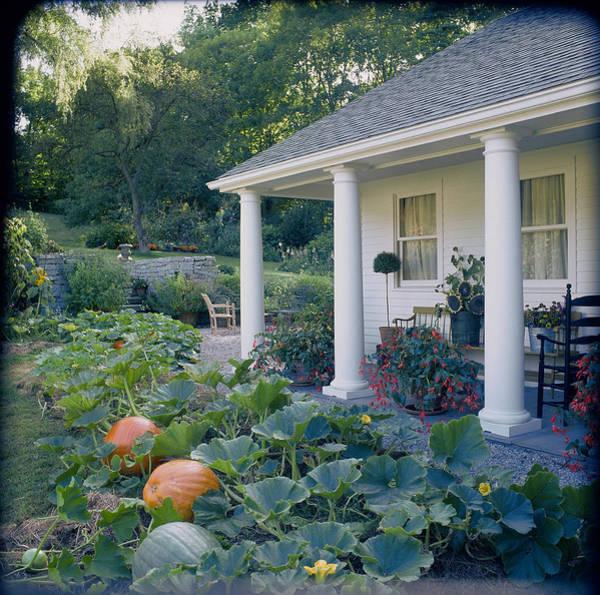 Vegetable Patch Wall Art - Photograph - Pumpkins Cucurbitaand Potted Begonias by Richard Felber