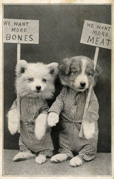 Vertical Line Wall Art - Photograph - Puppies Demand Meat And Bones by Graphicaartis
