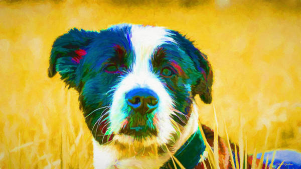 Painting - Puppy 482 - Painting by Ericamaxine Price