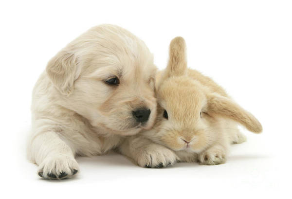 Photograph - Puppy Bunny Babies by Warren Photographic