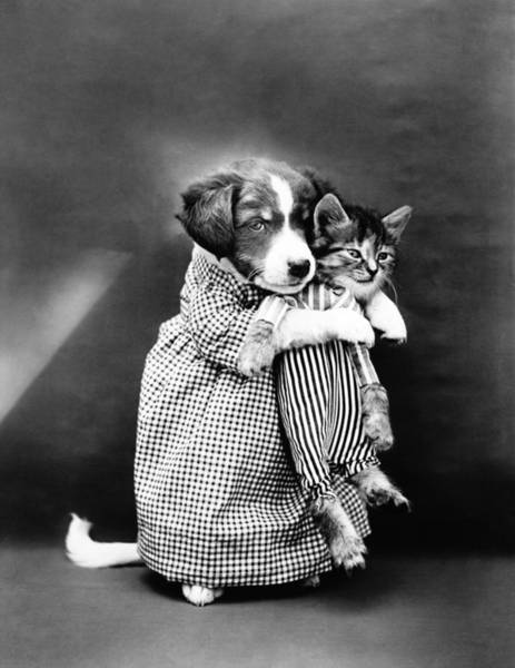 Cute Kitten Photograph - Puppy Holding A Kitten - The Nurse - Harry Whittier Frees by War Is Hell Store