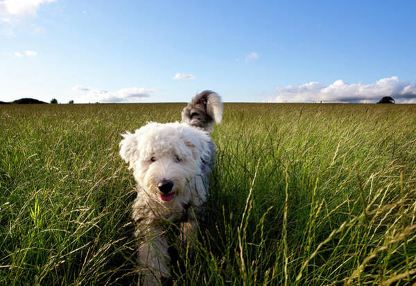 Puppy Photograph - Puppy In A Field by Lockiecurrie