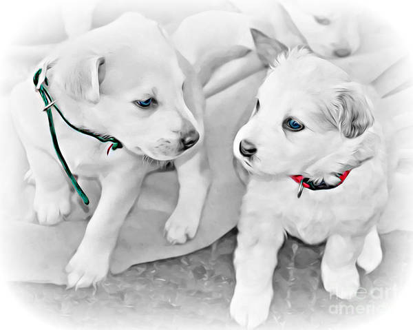 Wall Art - Photograph - Puppy Love by Kathy M Krause