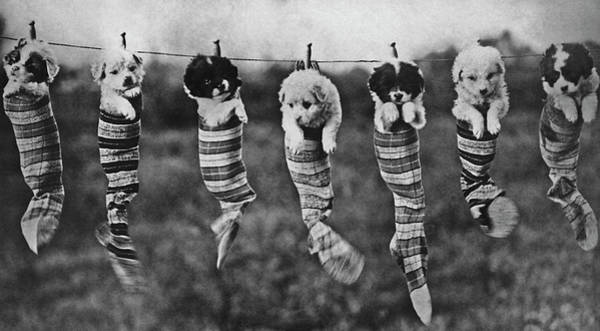 1929 Photograph - Puppy Wash Day by Archive Photos