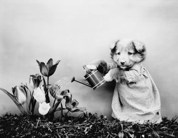 Wall Art - Photograph - Puppy Watering Flowers - Harry Whittier Frees by War Is Hell Store