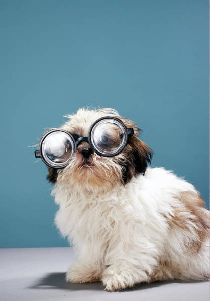 Kitsch Photograph - Puppy Wearing Thick Glasses by Martin Poole