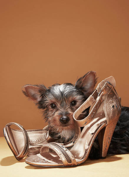 Damaged Photograph - Puppy With Damaged Shoe by Martin Poole