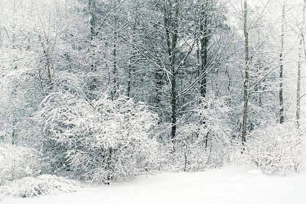 Photograph - Pure Michigan by Kathi Mirto