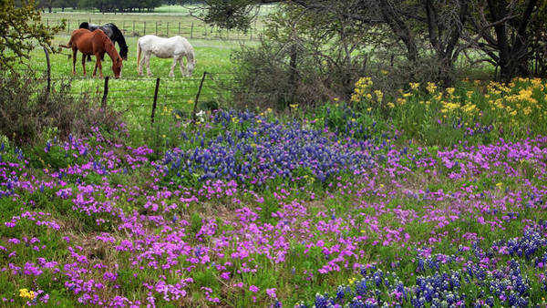 Photograph - Bluebonnets And Pure Texas  by Harriet Feagin