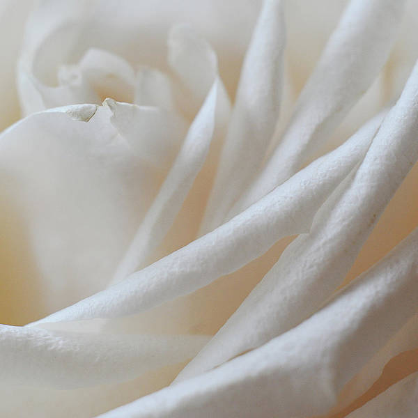 Photograph - Purity by Michelle Wermuth
