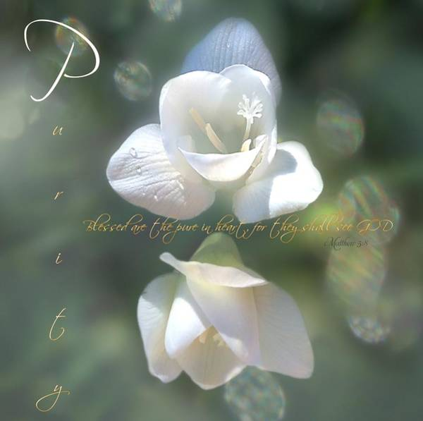 Photograph - Purity by Valerie Anne Kelly