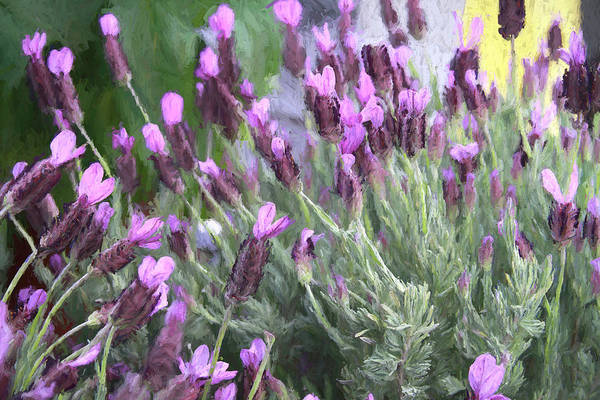 Photograph - Purple And Pink by Donna Kennedy