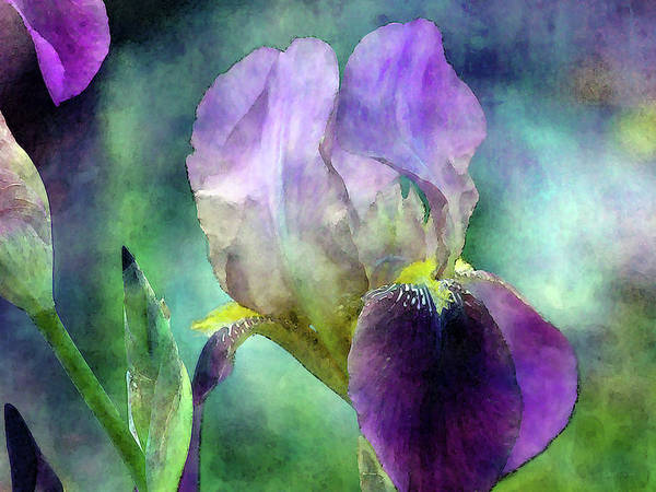 Photograph - Purple And Yellow 6808 Idp_2 by Steven Ward