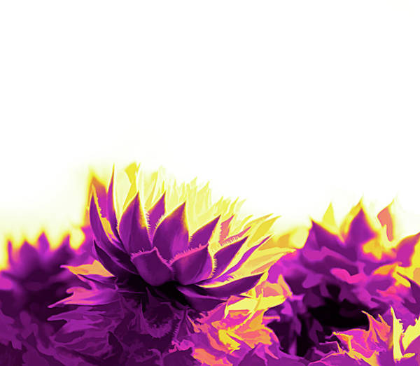 Digital Art - Purple And Yellow Houseleeks by Scott Lyons