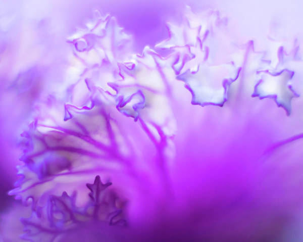 Photograph - Purple Mystery by Susan Callaway