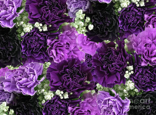 Photograph - Purple Carnations Flora by Rockin Docks