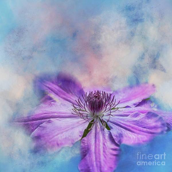 Mixed Media - Purple Clematis by Eva Lechner