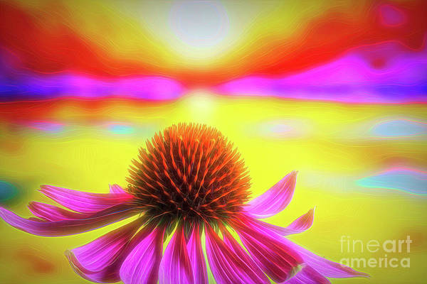 Wall Art - Photograph - Purple Coneflower 2 by Veikko Suikkanen