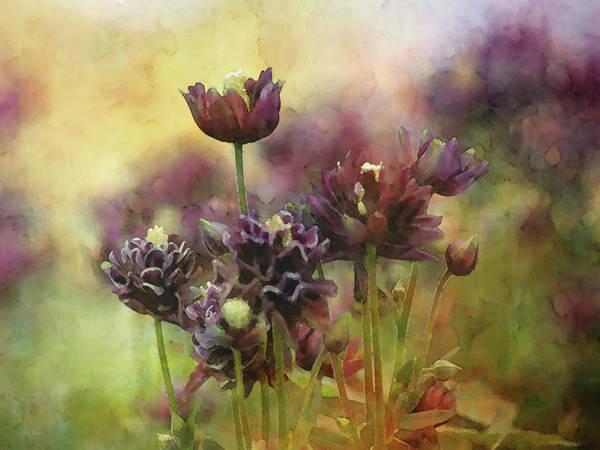 Photograph - Purple Damsels 6480 Idp_2 by Steven Ward