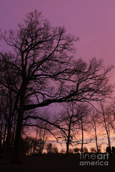 Photograph - Purple Dawn by Paula Guttilla