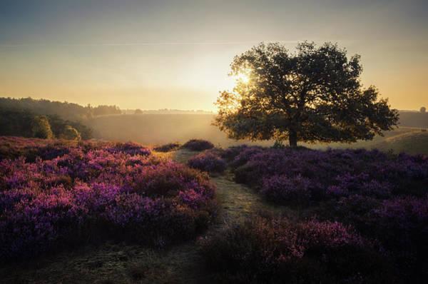 Heath Photograph - Purple Dream by Rob Visser