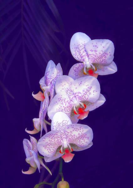 Photograph - Purple Dream by Rosalie Scanlon
