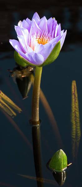 Photograph - Purple Elegance by Paul Croll