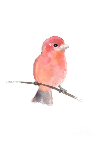 Wall Art - Painting - Purple Finch Pink Bird Watercolor Painting by Joanna Szmerdt