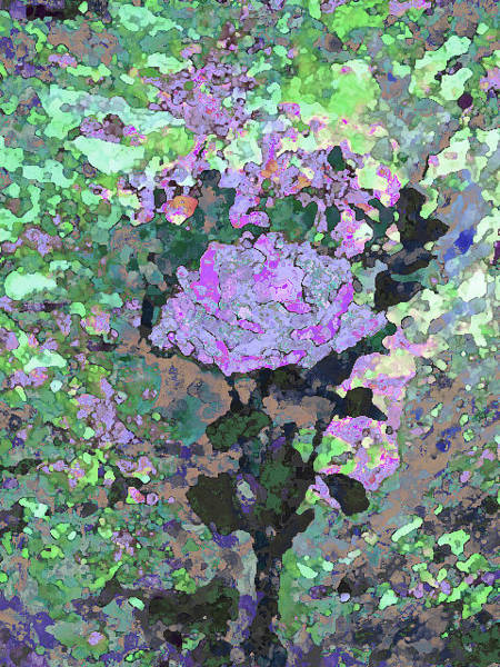 Mixed Media - Purple Flower 1001 by Corinne Carroll