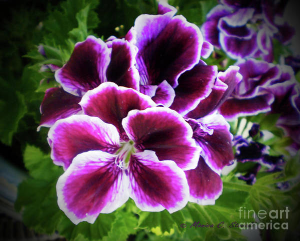Photograph - Purple Flower Pr 7 by Monica C Stovall