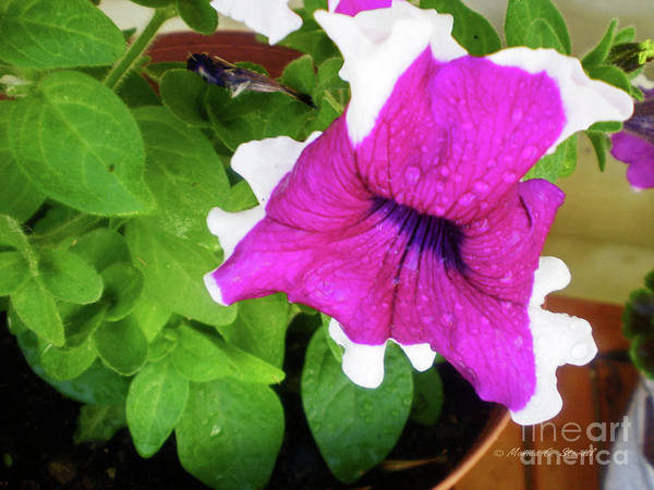 Photograph - Purple Flower Pr5 by Monica C Stovall