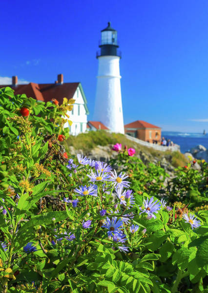 Photograph - Purple Flowers At Portland Head Light by Dan Sproul