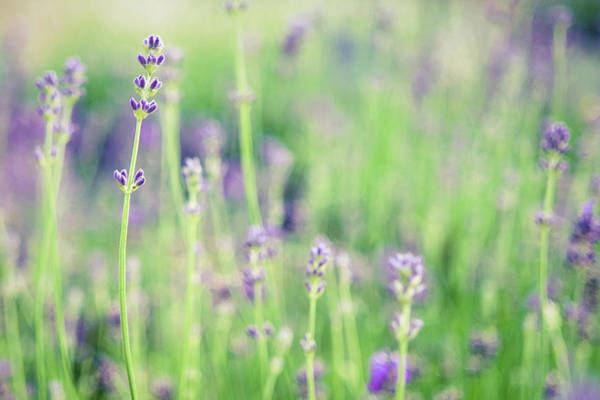 Photograph - Purple Flowers by Nicole Young