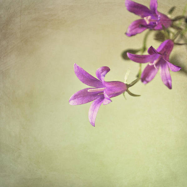 Photograph - Purple Flowers by Photo - Lyn Randle