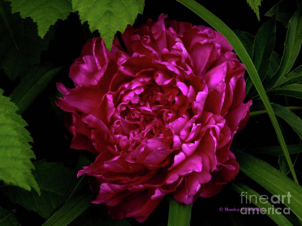 Photograph - Purple Flowers Pr11 by Monica C Stovall