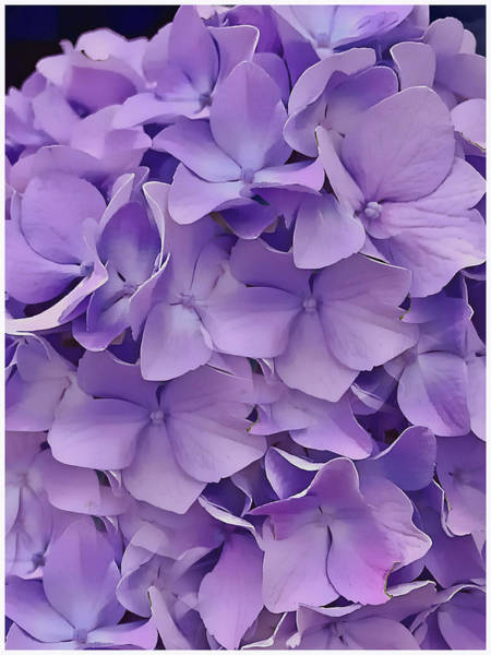 Digital Art - Purple Hydrangea  by Cindy Greenstein