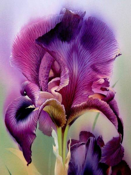 Painting - Purple Iris Head by Alina Oseeva
