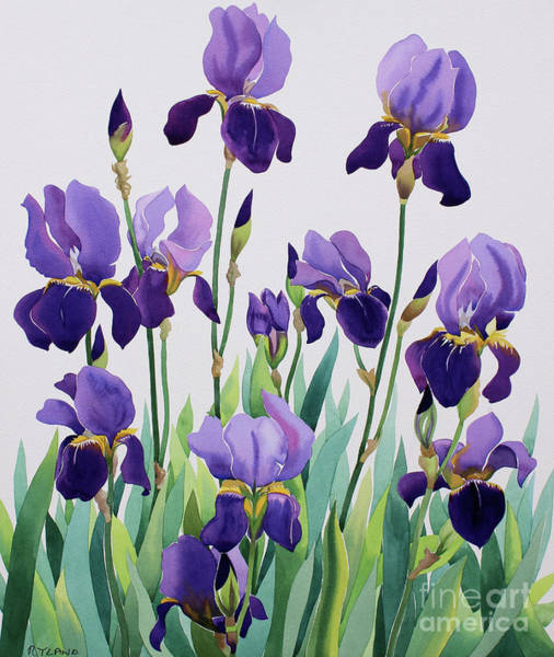 Wall Art - Painting - Purple Irises by Christopher Ryland