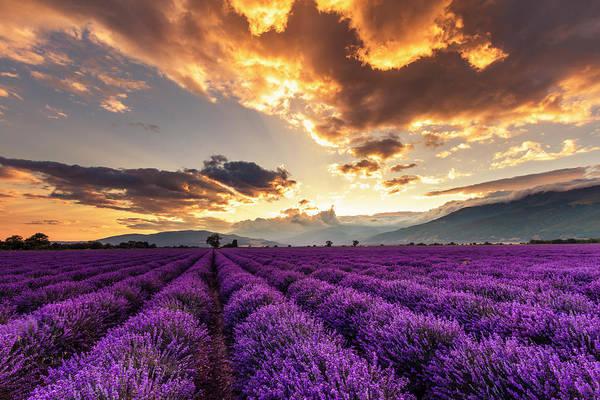 Wall Art - Photograph - Purple Land, Golden Sky by Evgeni Dinev