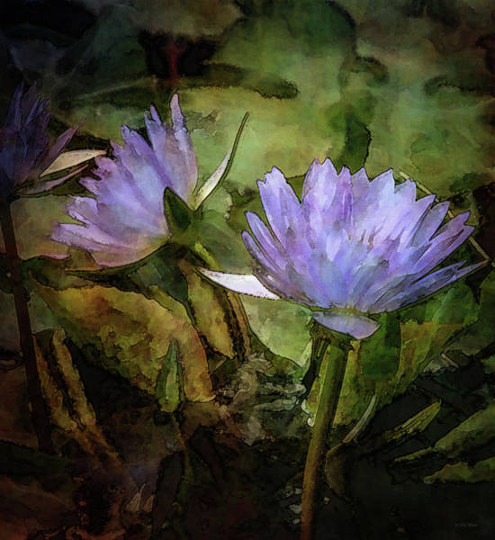 Photograph - Purple Lotus Blossoms 4713 Idp_2 by Steven Ward