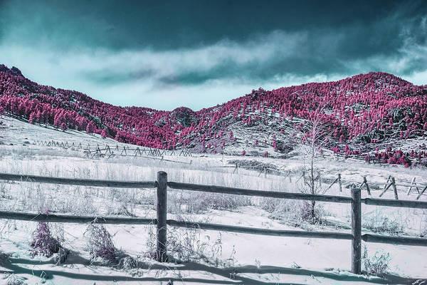 Photograph - Purple Majesty by Dan Urban