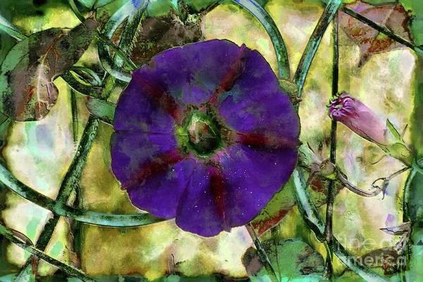 Mixed Media - Purple Morning Glory by Jolanta Anna Karolska