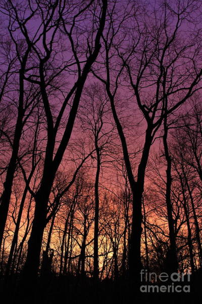 Photograph - Purple Orange Sky by Paula Guttilla
