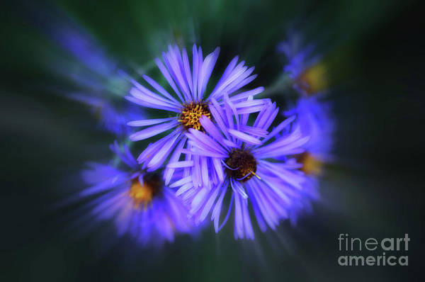 Wall Art - Photograph - Purple Passion by Elaine Manley