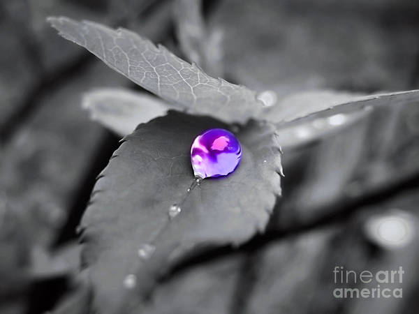 Photograph - Purple Pearl by Patti Whitten