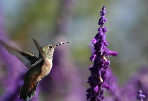 Photograph - Purple Persuasion  by Fraida Gutovich